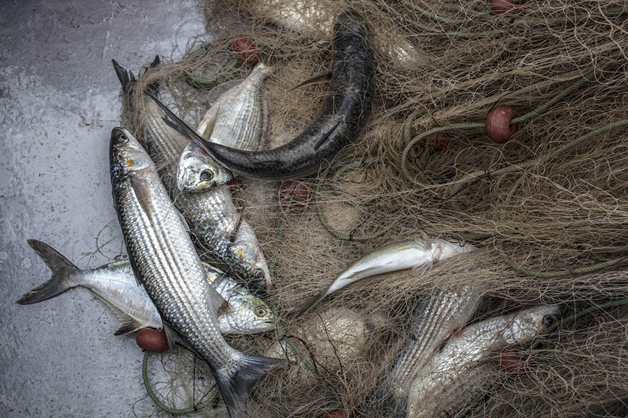 <span>Lifestyle</span>Huge Catch of Fish